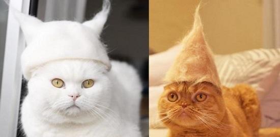 养猫都有什么烦恼?养猫的烦恼